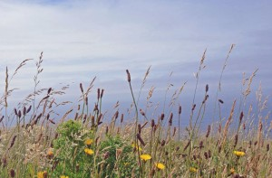 View of grasses overlooking the sea on the cliffs of Moher