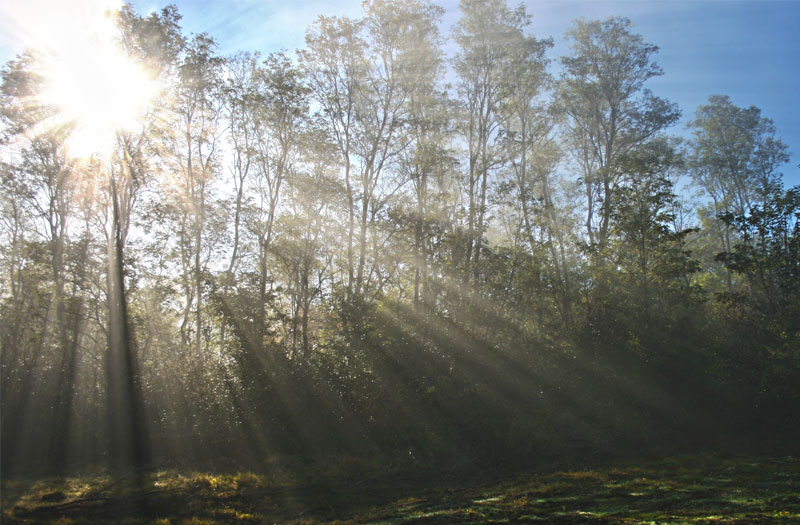 Rays of sunlight streaming through trees