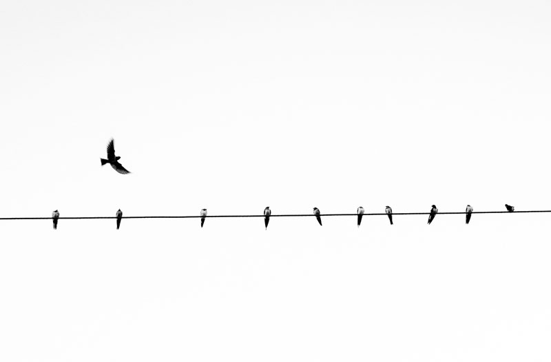 Birds perched on a wire with one in flight