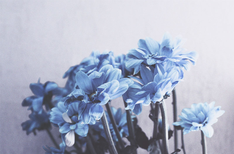A bunch of blue flowers