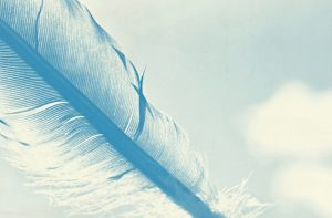 close-up of the quill of a feather in blue tones