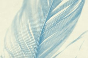 close-up of a feather in blue tones