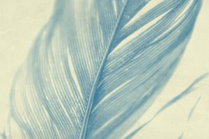 close up of a feather in blue tones